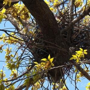 ハリガネだらけの鳥の巣 ~ 動物顔のパンジー