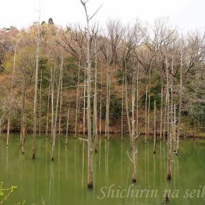 小山内裏公園の大田切池