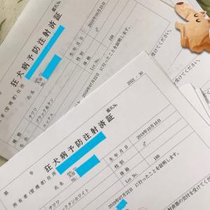 恒例の狂犬病接種~
