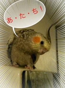 ひまわりちゃんがNo.1  ? (紅茶の美味しいクラウドファンディング)