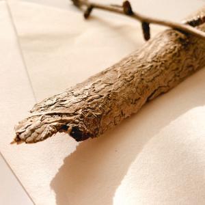 御神木の欠片