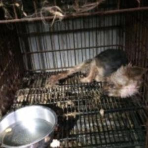 【署名のお願い】犬猫を悪質ペット業者の地獄から救う規制を