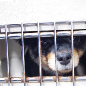 【署名のお願い】悪質ペット業者の規制を