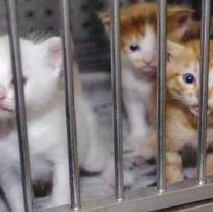 【署名のお願い】犬猫殺処分ゼロへ! 各都道府県に公設民営の動物シェルターを!
