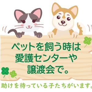 【署名のお願い】悪徳ブリーダーから犬猫を守ろう