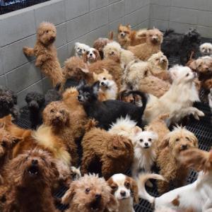 【署名のお願い】福井県の動物繁殖業者に動物愛護法の適正な運用と起訴を求めます!