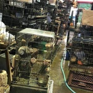 【署名のお願い】堀井動物園の第一種動物取扱業の登録取消しを求めます