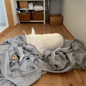 我が家の獣臭対策