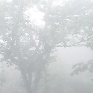 午後から雨の予報!!