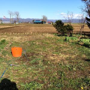 雑草畑、苗を植えました