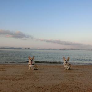 早朝の砂浜散歩で弾けてきました♪