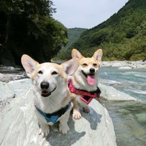 徳島県の穴吹川で下見してきました ♪
