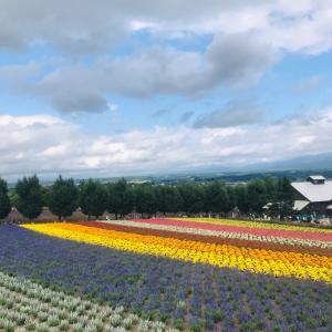 北海道旅1 富良野~四季彩の丘