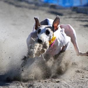 ルアー回収犬は俺だ!第33回ぎゃろっぷ杯@御殿場馬術スポーツセンター。