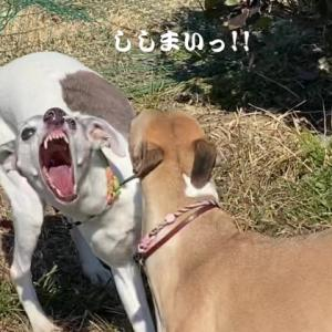 肉!獅子舞!コストコ!バカ殿!肉!