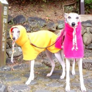 2011年秋・九州旅行・ダイジェスト。