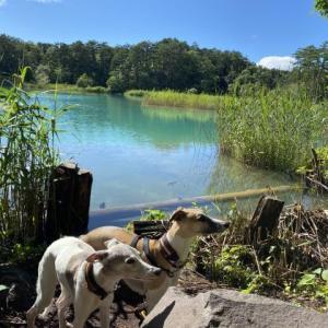 五色沼自然探勝路を歩く。