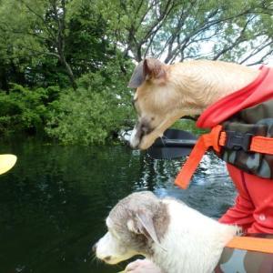 桧原湖にてカヤックで遊ぶ。