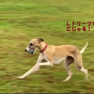 サイトハウンドスポーツフェス2021秋。