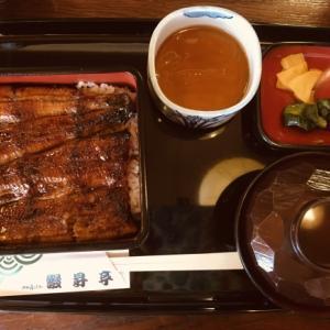 浜松で鰻食べてきました