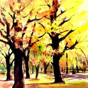 逆光の樹間