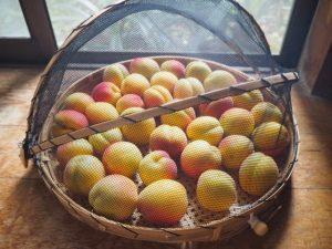 今年の杏は信州大実です!