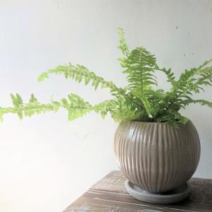観葉植物の植え替えは今のうちに♪