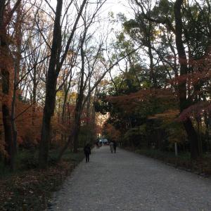 神社に親しもう☆糺の森をゆったりと楽しもう♪☆下鴨神社