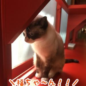 福ちゃんは 新たな称号を 手に入れた!