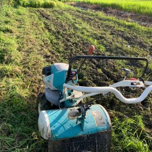 草刈りと金銭教育