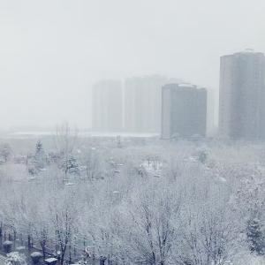 今冬の初雪