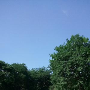 """ついに来ちゃいました、本格的な夏 (;´Д`A """"`"""