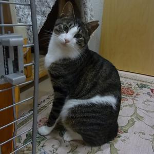 定休日に・・・CATS&DOGS動物福祉協会・設立4周年記念