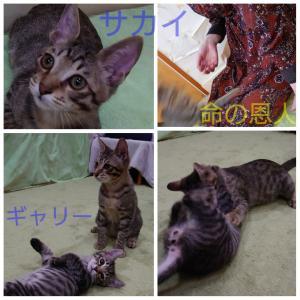 猫が苦手な人が・・・外猫を保護してくれて・・・有難う♡
