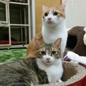 本日営業とレスター&フラムのお届けと事故猫のお知らせ