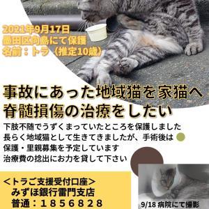 事故猫ご支援のお願い