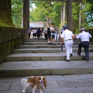 犬と日光にひとり旅に行ってきました