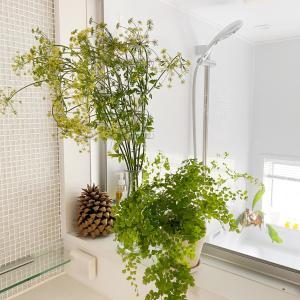 今朝の洗面所は、安上がりで爽やかインテリア