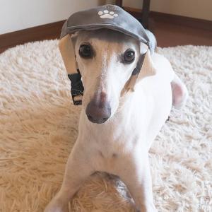 3COINSでわんこ帽子