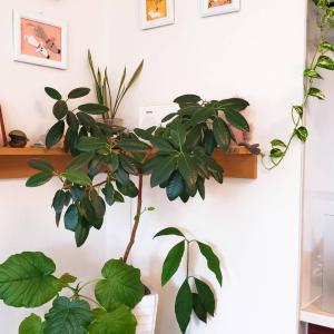 植物と一緒に