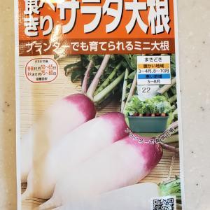 ミニ大根ペットボトル栽培