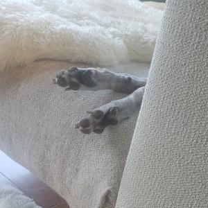 だぁれの足?