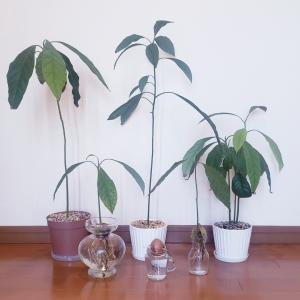 種から育った植物たち