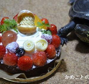 かめこ、お誕生日おめでとう!!