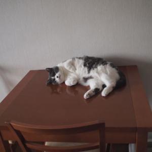 夏のテーブル
