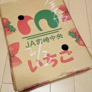 いちごの箱