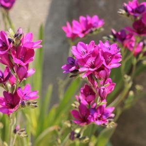 春先からの☆お花♪パート1