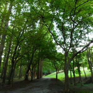 朝活☆香月市民の森♪