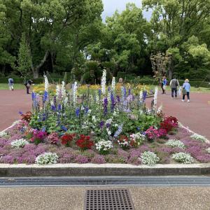 キャ二さんぽ55~京都植物園