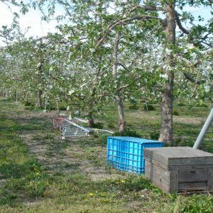 ミツバチ受粉の産物、信州須坂 りんごはちみつ